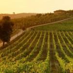 ENOLOGIA: A Firenze si parla di costi di produzione del vino