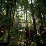 MUGELLO: Gli alberi del territorio a segnare il corso delle stagioni
