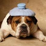 Nel mese di Marzo visite gratuite dal veterinario