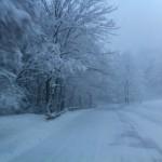 BORGO SAN LORENZO: Ordinanza per la cura di alberi e siepi per evitare disagi come quelli capitati con la neve