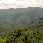 COMPRA UNA FORESTA: Iniziativa del Parco delle Foreste Casentinesi