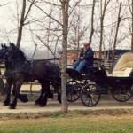 BARBERINO: Cavallo lasciato morire di fame e stenti a Montecarelli. Altri due salvati dall'Enpa