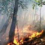 FIRENZE: Divieto di accensione fuochi e di bruciare residui vegetali in tutta la Provincia