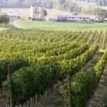 VINO: Successo mugellano con 'Podere Fortuna' al Japan Wine Challenge di Tokyo
