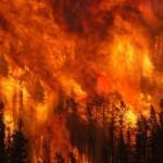 SAN ROSSORE: In fiamme parte della pineta. L'incendio sarebbe doloso