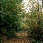 TREKKING: Un serie di escursioni naturalistiche porteranno gli appassionati tra le colline fiorentine