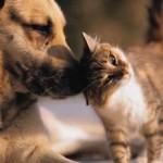 ESTATE: In vacanza con gli animali. Regole e consigli per viaggiare felici col proprio gatto o cane