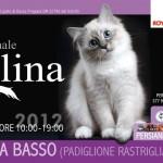 Firenze, a Febbraio protagonisti i gatti con la 4° esposizione internazionale felina alla Fortezza