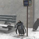 METEO: Allerta meteo per neve e ghiaccio anche in pianura fino a domenica. A Borgo la notizia arriva per sms