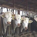 AGRICOLTURA: La Regione Toscana contro l'IMU sui fabbricati strumentali dell'agricoltura
