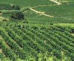 SCADENZE: Entro il 31 gennaio in Toscana c'è da pagare la Tariffa Fitosanitaria