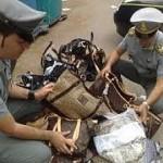 CAMPI BISENZIO: Seguono due cinesi intenti a rubare..e trovano prodotti contraffatti per 5 milioni di euro. Colpo grosso della Guardia di Finanza