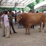 FAM 2012: Genetica, certificazione e misure di sviluppo i temi di una mostra con grandi numeri e grande qualità