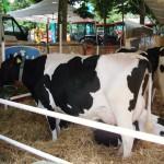 UNIONE MUGELLO: Tutti uniti in difesa del latte mugellano