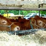 BORGO SAN LORENZO: Aperta la 33° Fiera Agricola. E domattina l'inaugurazione ufficiale