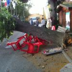 """BORGO SAN LORENZO: Crolla un albero al """"Romanelli"""", tragedia sfiorata. I danni del maltempo di ieri"""