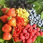 LATEIS: A fine agosto protagonisti i piccoli frutti
