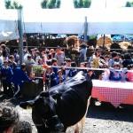 Tutto pronto a Borgo San Lorenzo per la FAM 2014