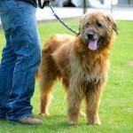 PONTASSIEVE: Chi vuole Alfio? Oltre 60 i cani adottati, col contributo del Comune.