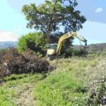 BONIFICA MUGELLO: Rimossa una grossa quercia a Vicchio. Tanto ancora da fare