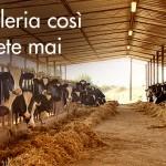 MUGELLO: Il latte diventa il protagonista di….un museo