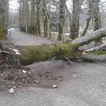 Anche a Borgo S.Lorenzo disponibili fondi per i danni del vento