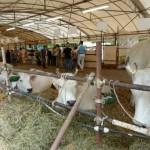 Un vero successo per la 35a Fiera Agricola Mugellana
