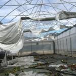 CIA Toscana – Prime stime dei danni causati dal maltempo