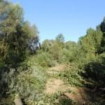 Borgo San Lorenzo –  iniziati gli interventi di bonifica che interesseranno un ampio tratto della Sieve