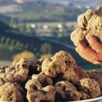 Mugello – Il tartufo va all'Expo