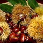 Castagno d'Andrea – Ultima domenica dedicata ai marroni e ai prodotti del bosco