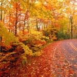 L'apoteosi del fall foliage – Trasportati nel Parco con il bus a Camaldoli e a Ridracoli