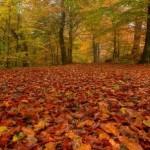 Nel Parco delle Foreste Casentinesi arriva il Festival del fall foliage
