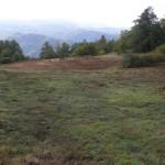 Parco delle Foreste Casentinesi – Un Parco di Foreste… Ma anche di praterie!