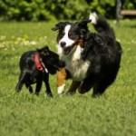"""Rubrica """"Scodinzolando s'impara"""" – I cani vedono a colori o in bianco e nero?"""