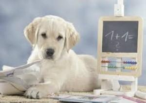 immagine 1 cane -lavagna