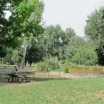 Firenze – Al parco dell'Anconella gli alberi piantati da Legacoop