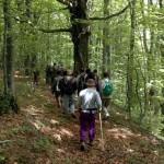 Parco delle Foreste Casentinesi – Una rete degli ottocento chilometri di sentieri