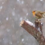 Meteo – E' arrivata la neve al Passo della Consuma