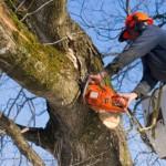 BORGO SAN LORENZO – Per la manutenzione e la sicurezza, necessarie potature e abbattimenti di alberi