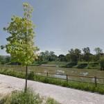 Firenze – Piantati nuovi alberi al parco dell'Anconella
