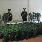 RUFINA – Controllati e arrestati due persone per coltivazione di marijuana.