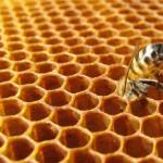 VICCHIO – Corso di apicoltura