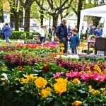BORGO SAN LORENZO – Si ripete l'appuntamento con FIORINFIERA