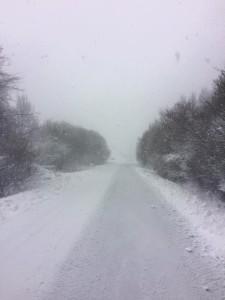 neve bruscoli