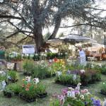"""Borgo San Lorenzo nel prossimo fine settimana parte """"Fiorinfiera"""", importante appuntamento del florovivaismo."""