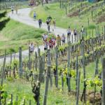 Pontassieve – Mezza Maratona – 21 km tra le colline
