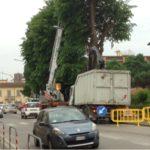 Borgo San Lorenzo – Al via il restyling del Viale Giovanni XXIII° – Iniziato il taglio degli alberi
