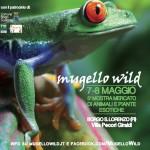 """Borgo San Lorenzo – La natura in mostra a """"Mugello Wild"""""""