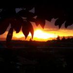 Mugello – Tramonti e girasoli immagini del'estate